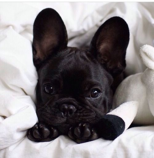 Pin By Camille La Vie On Eye Candy Baby Animals Cute Animals
