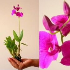 D 210716 12 Orchids And Orchid Flowers Klairvoyant Orchids Thrissur Kerala India Orchids Orchid Plants Orchid Flower