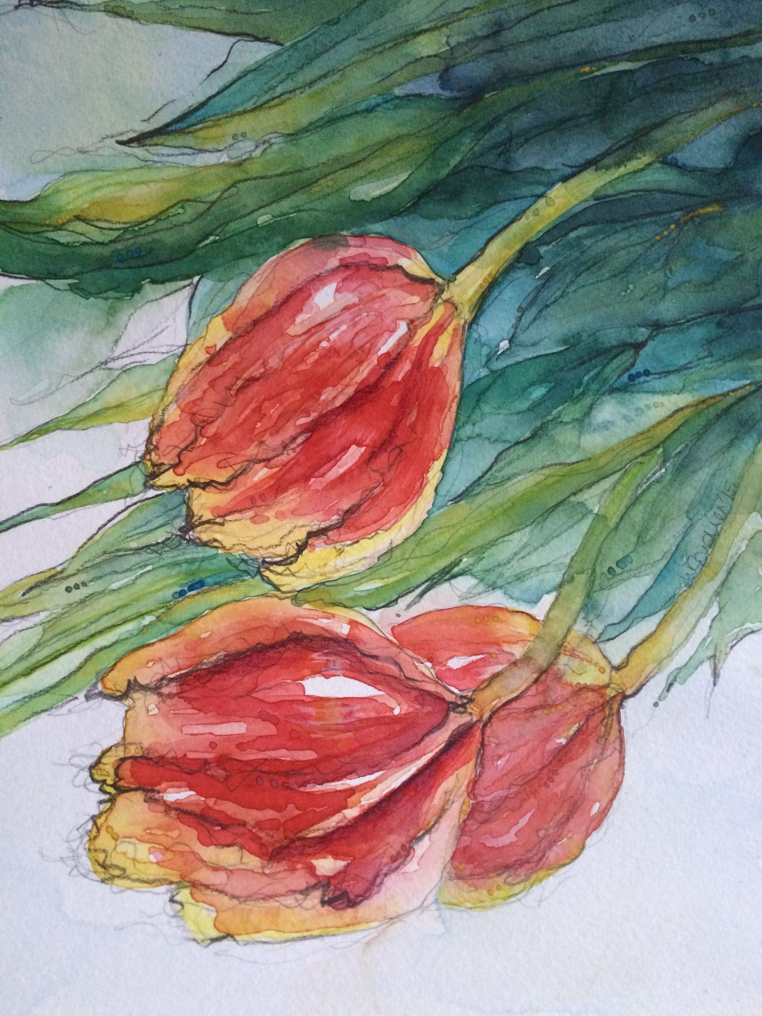 Tulips. Watercolour and pencil. Spring flowers | My watercolour ...