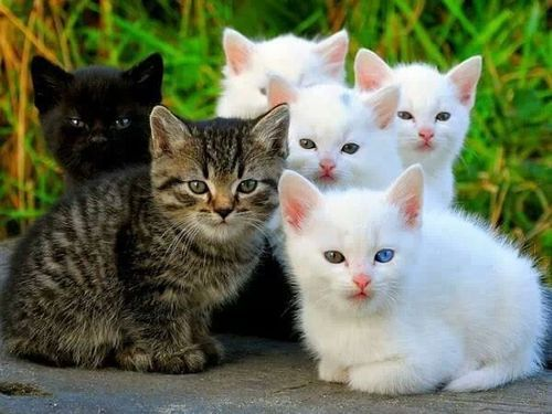 Litter Of Kittens White Tabby A The Cute Black One Beautiful