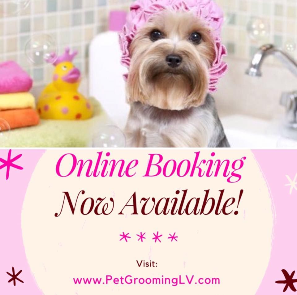 Book Your Next Grooming Appointment Online For Our Henderson Location Nv Henderson Lasvegas Books Online Nevada