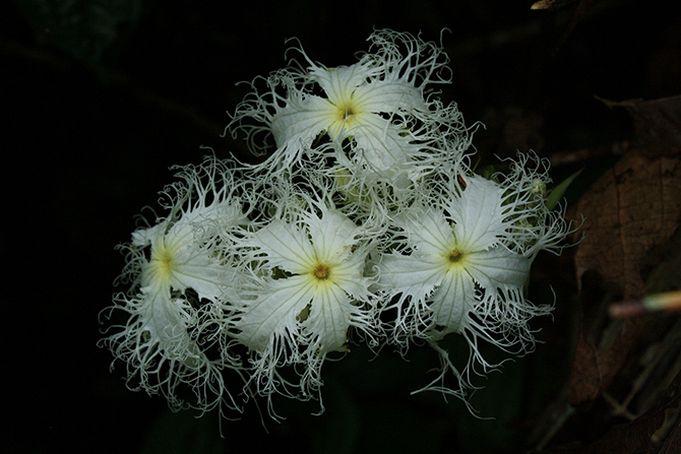 Najpiekniejsze Kwiaty Swiata Flowers Plants Dandelion