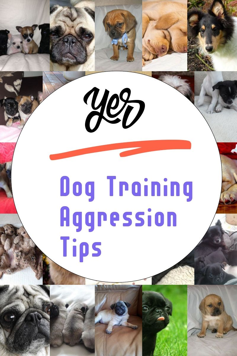 Dog Training Aggression Tips Dog Training Aggression Aggressive