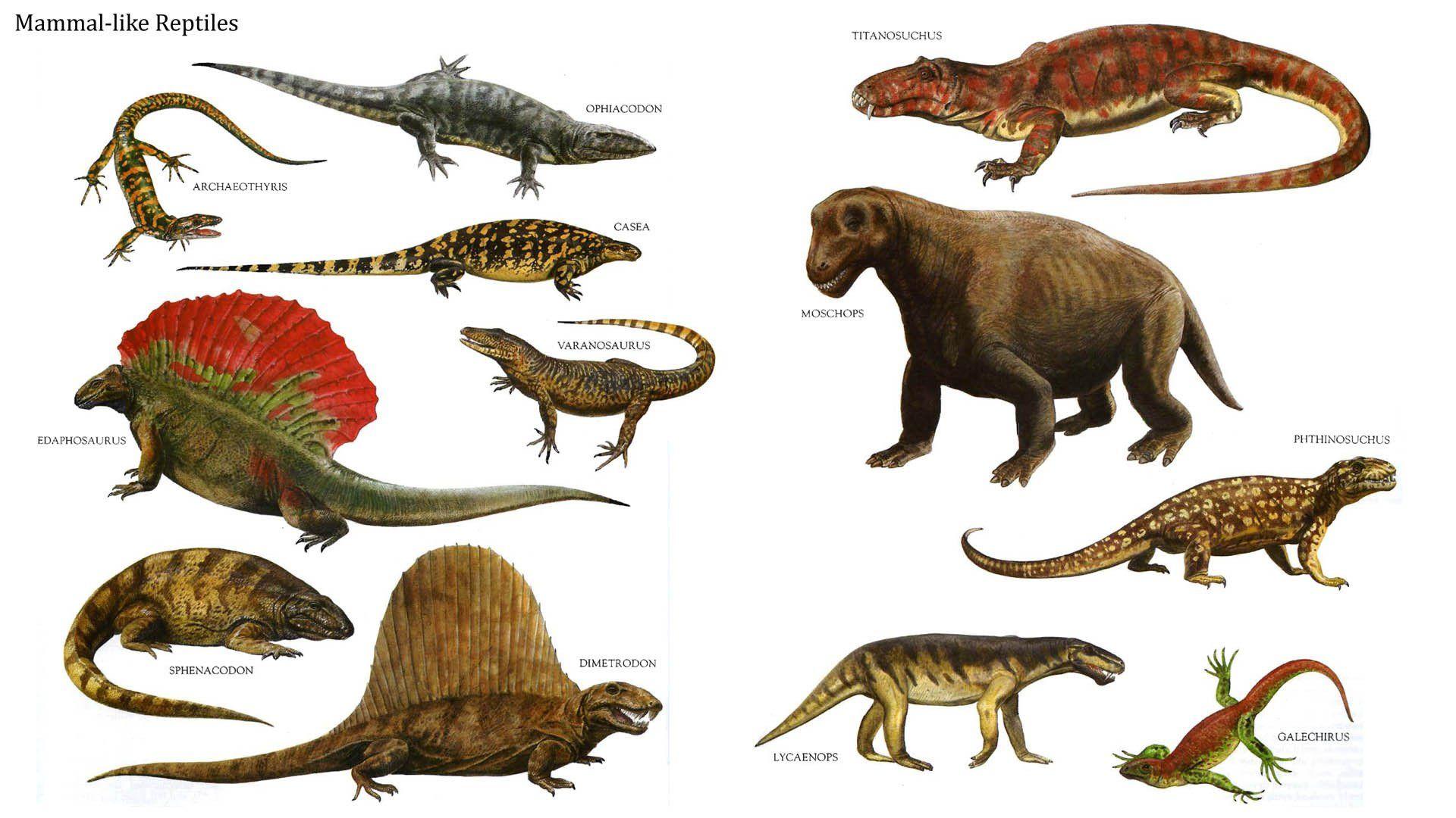 Reptiles antiguos | Es...
