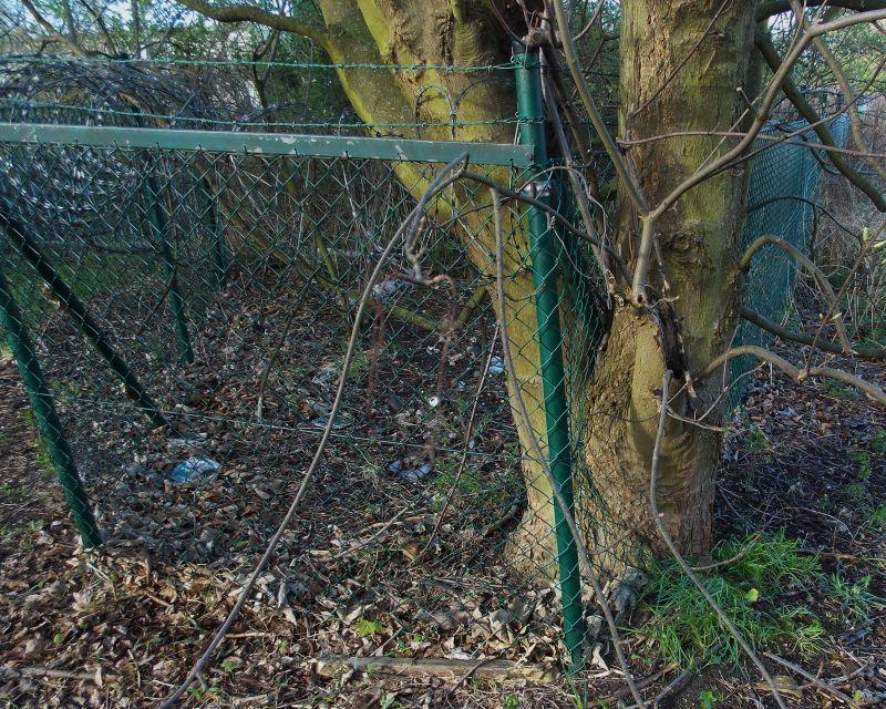 Der Zaun. Die Zäune.  Hier sieht man einen Baum, der um einen Zaun herum wächst.