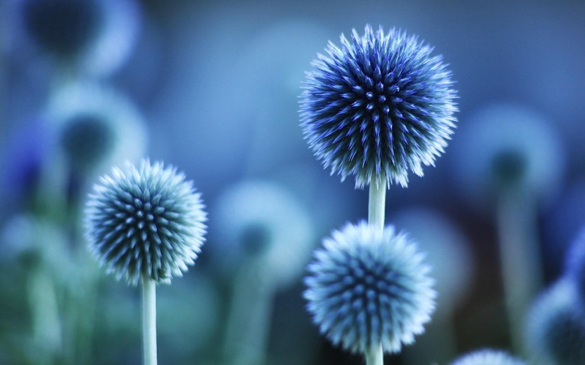 Blue Flower Wallpapers Desktop Background