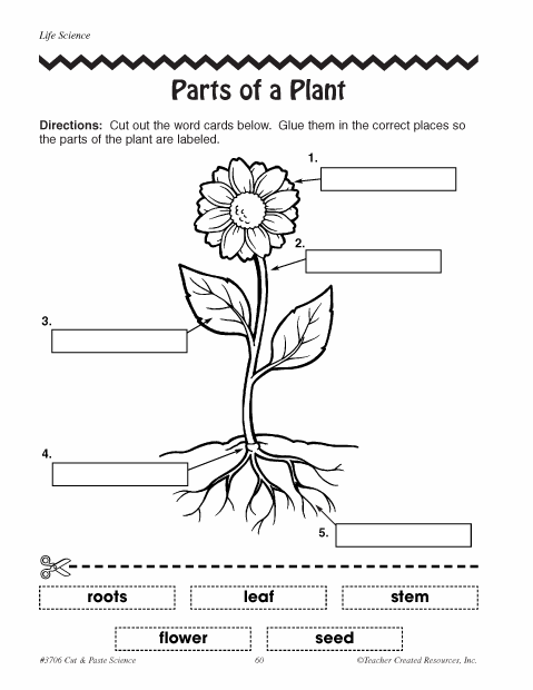 parts of plants worksheets click here parts of a plant Plant Diagram to Label Plant and Animal Cell Diagrams