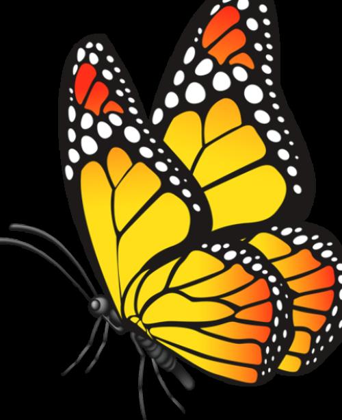 Pin De Mario Vega En Varios Como Pintar Mariposas Mariposas Monarca Dibujo Como Dibujar Cosas