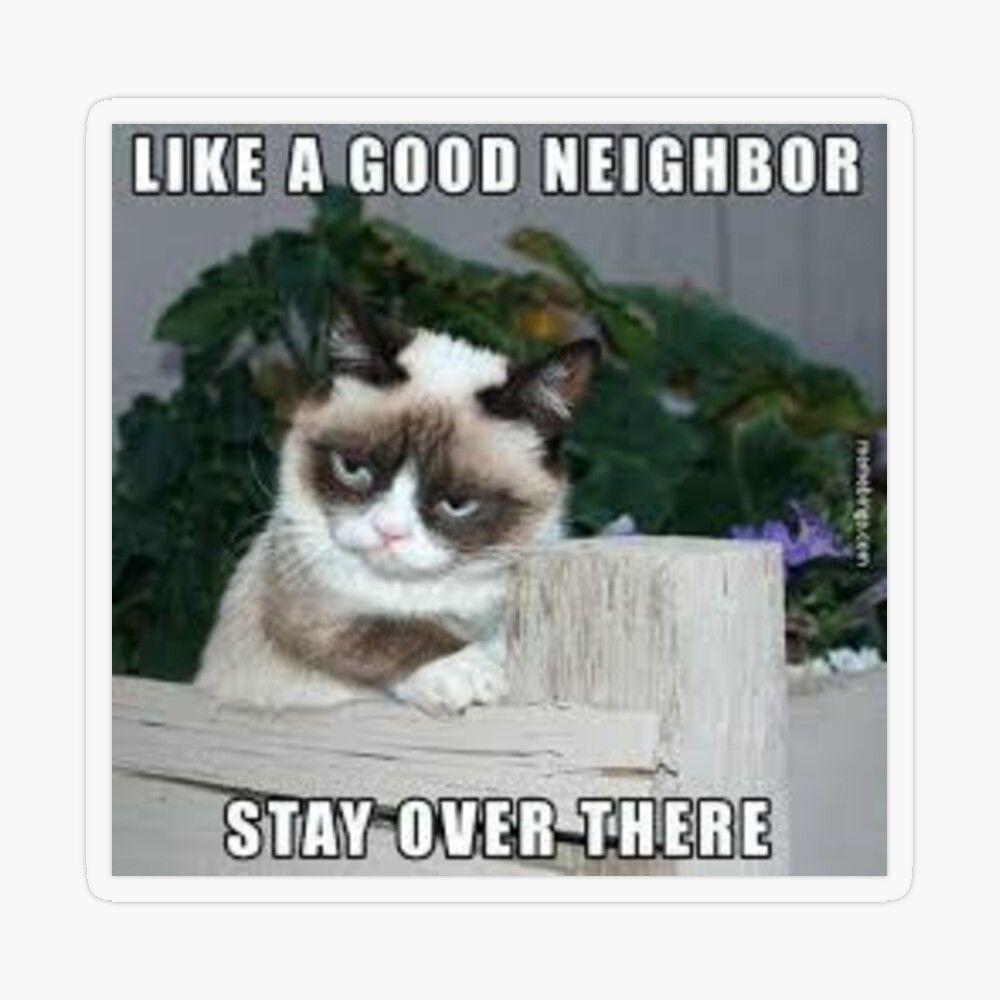Angry Cat Like A Good Neighbor Stay Over There Transparent Sticker By Steelpaulo Grumpy Cat Grumpy Cat Meme Cats