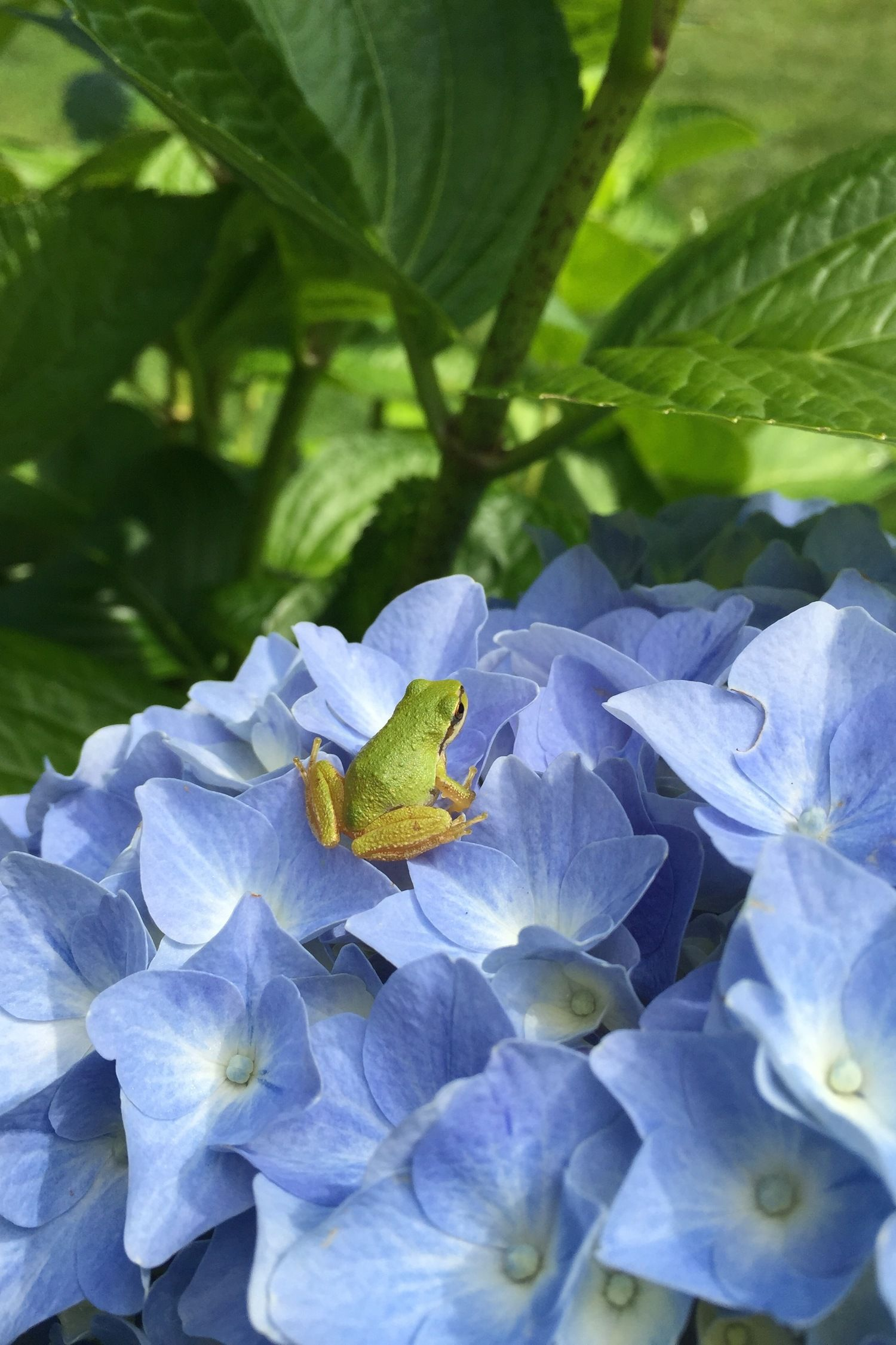 Hello little Froggie! The only thing I love as much as my