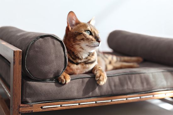 Architect Pets Launches New Line Of Modern Pet Products Get 20