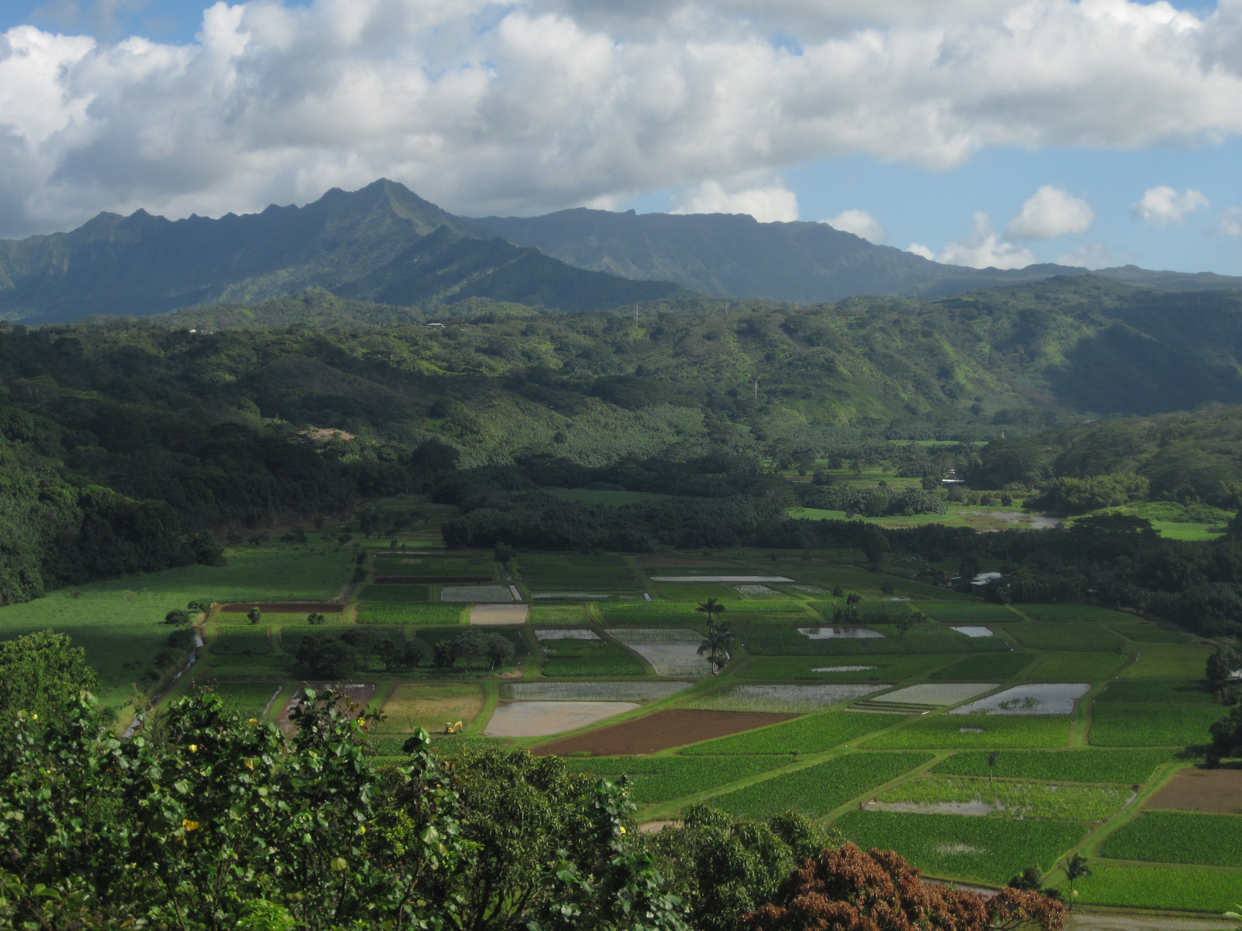 Taro fields in Hanalei Valley. Submitted by Rick Kornegay. #pinHawaii @Discover Hawaii