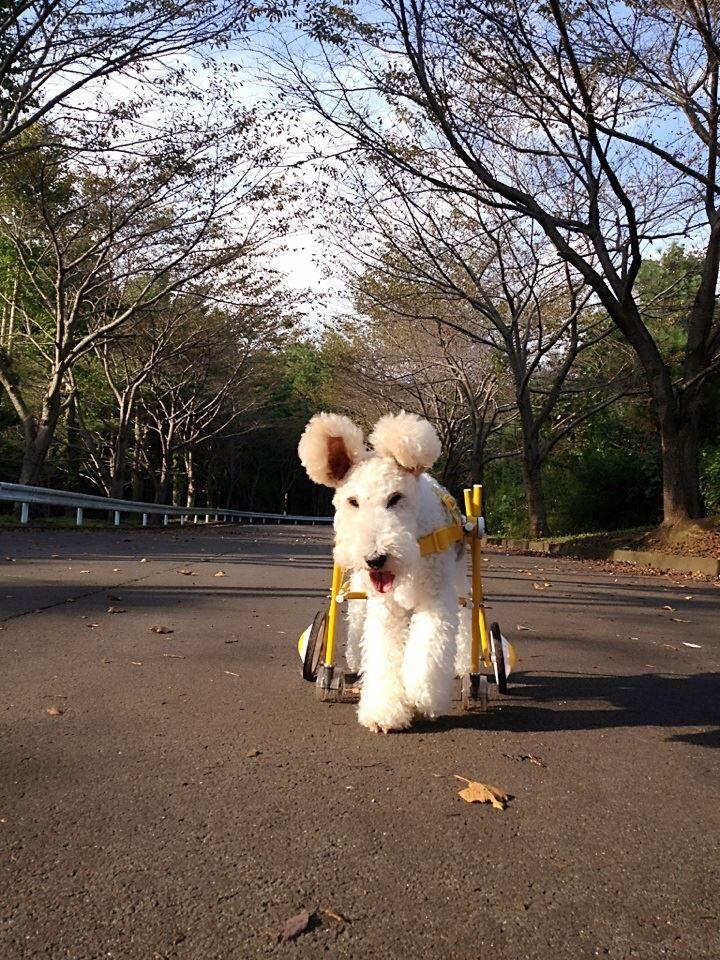 Duffy walking......