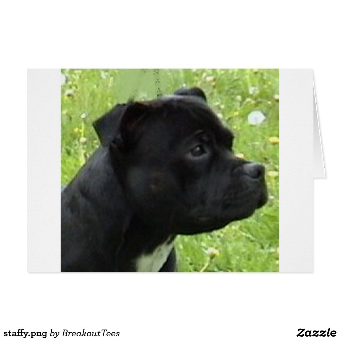 Staffy Png Zazzle Com Stafford Dog Staffordshire Bull Terrier Bull Terrier