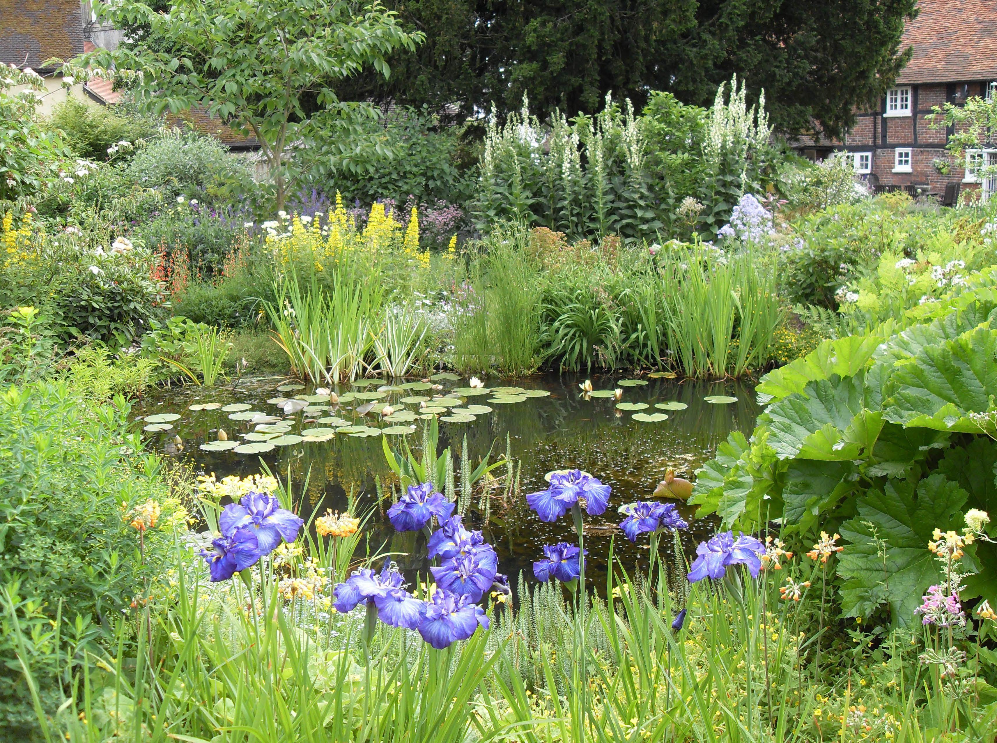 water gardens designs. Bog Gardens Exsplained  Lilies Water Garden and