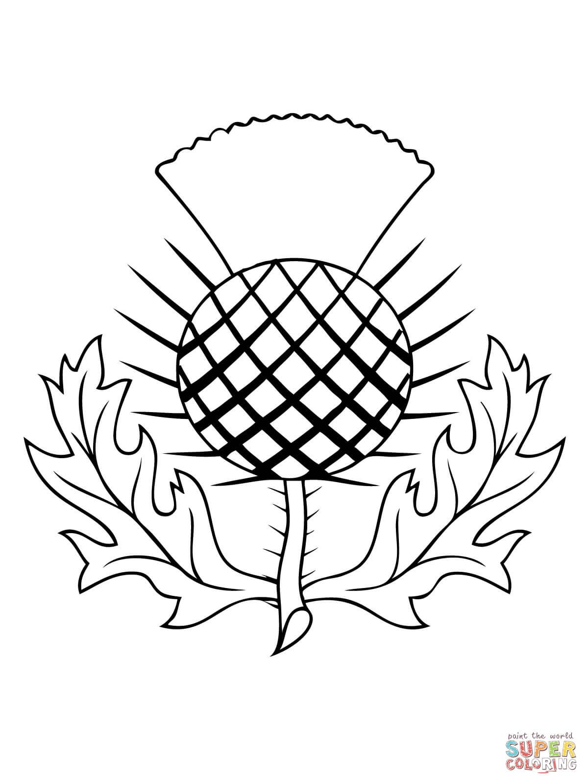 the thistle of scotland coloring page free printable coloring