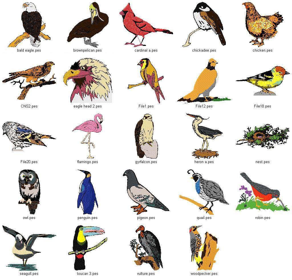 Birds, Birds, Birds South african birds, Bird species