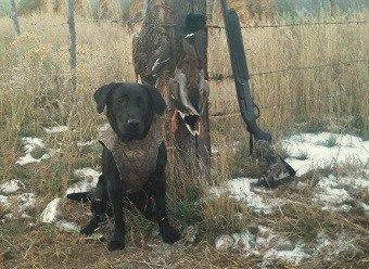 The Most Powerful Hunting Dog Commands Sit Stay Come Dog