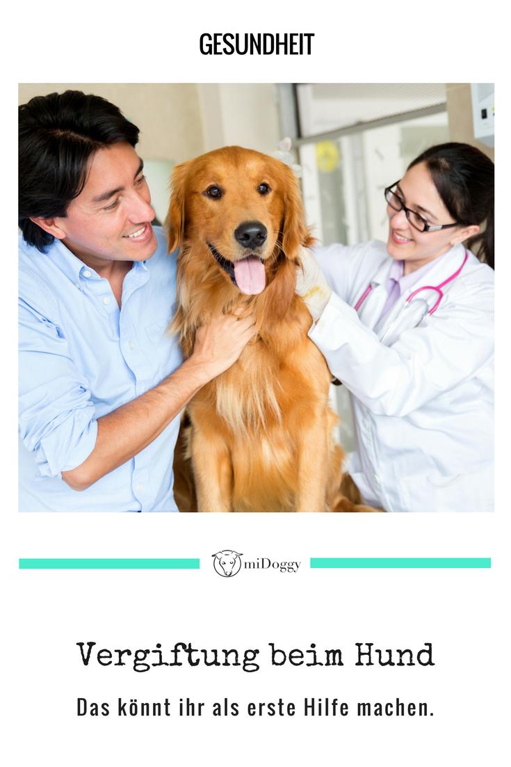 Erste Hilfe Aktivkohle Bei Vergiftungen Hunde Durchfall Hund Hund Hat Durchfall