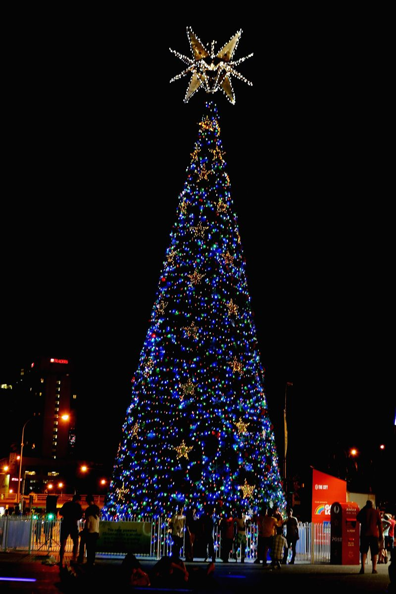 Brisbane Australia Christmas Tree Beautiful Christmas Trees Tree