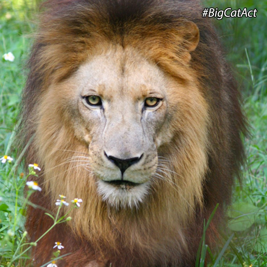 Pin on Big Cat Rescue