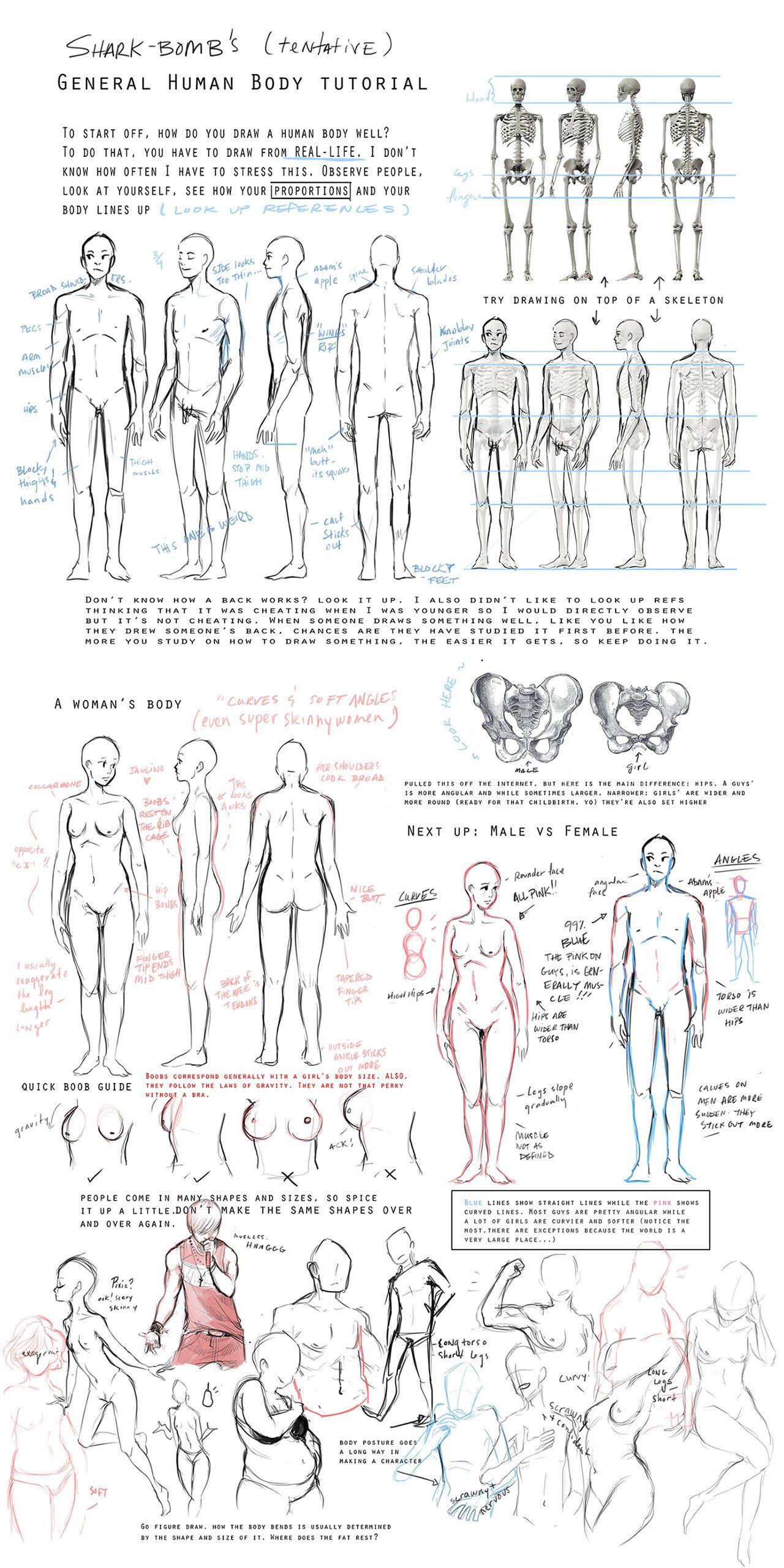 General Body Tutorial By ~sharkbomb On Deviantart