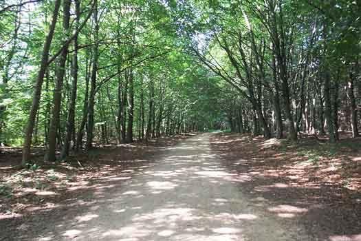 Sherwood Forest #CheapflightsGG