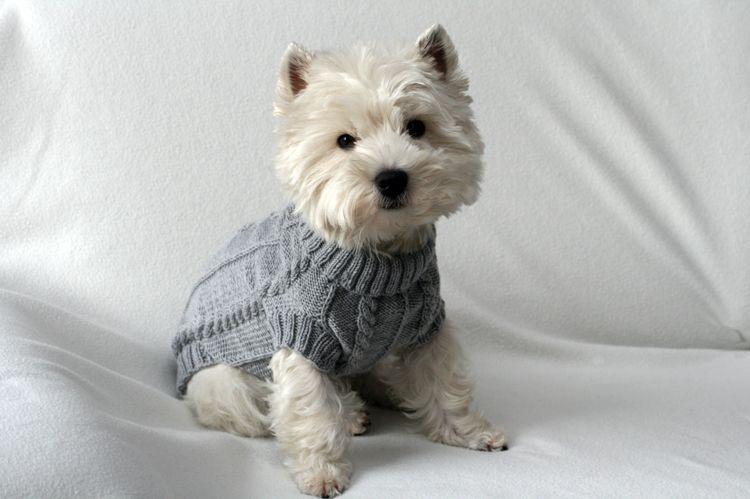 Hundepullovergrau | Stricken | Pinterest | Katzen kleidung, Hund ...