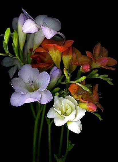Pin By Jayla Near On Flora S On Dark Background Flower Painting Beautiful Flowers Indoor Flowering Plants