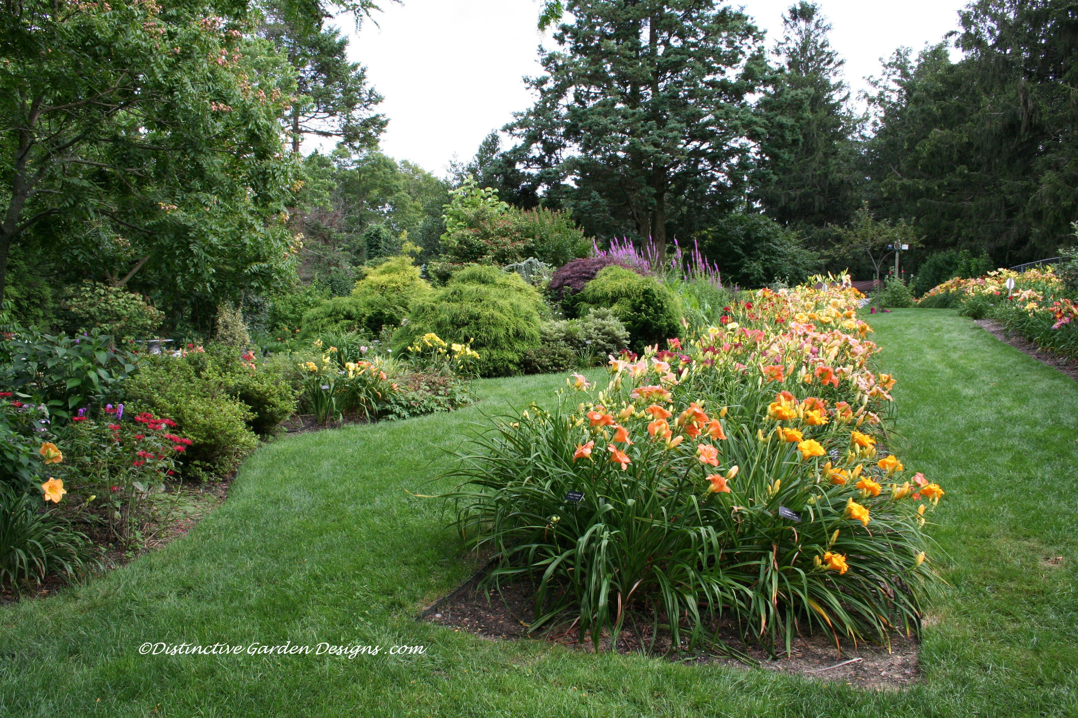 Formal Daylily Beds With Perennial Borders, Li