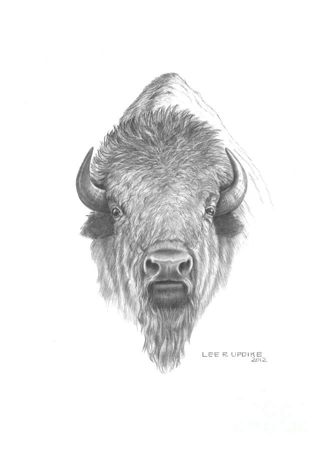 Plains Buffalo Drawing | mood | Búfalo, Bisonte americano y Tatuaje ...