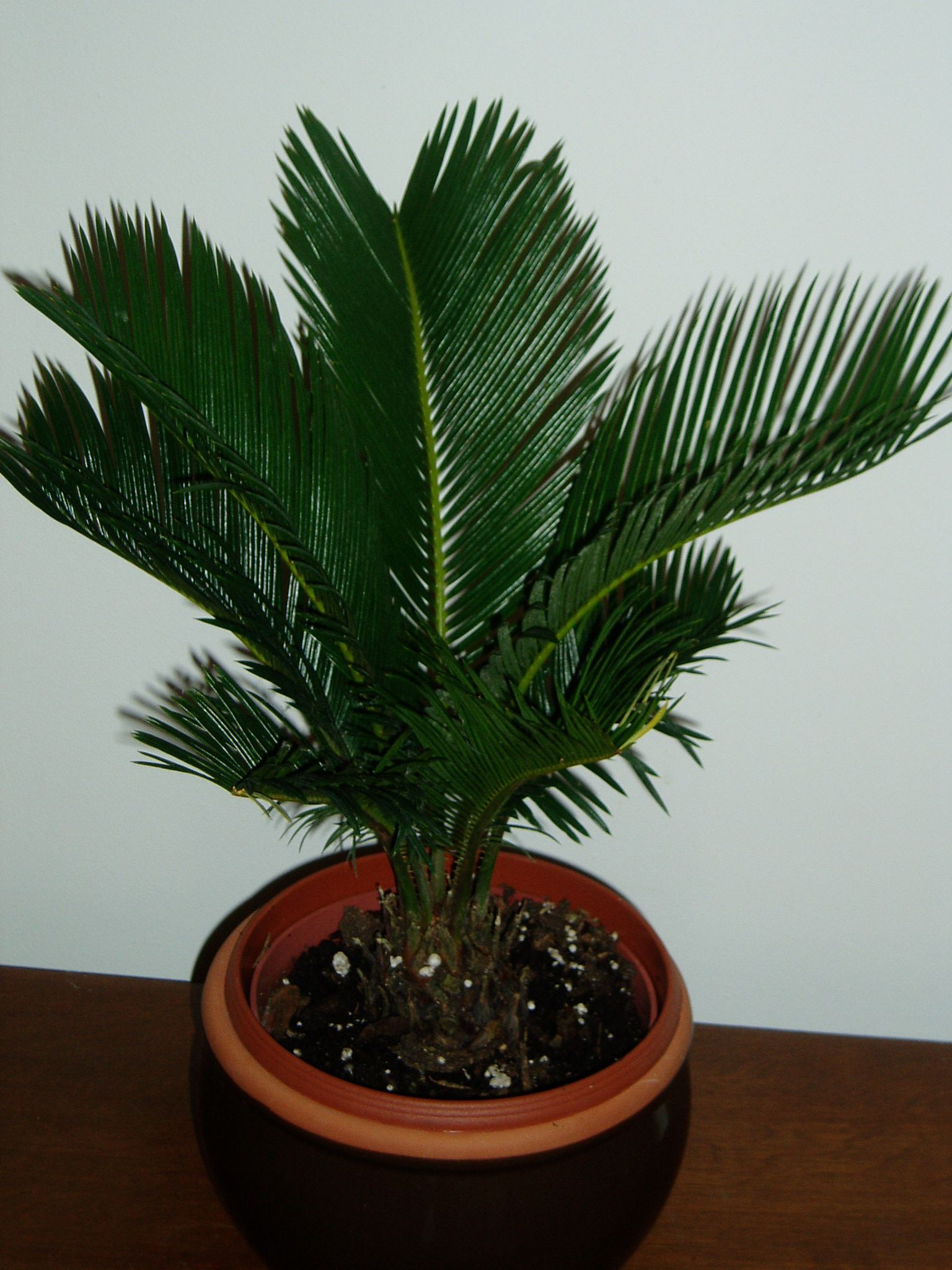 Indoor Plant Types Palm Type House Plants Palm Was Native To The Tropics