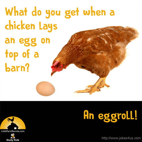 What Do You Get When A Chicken Lays An Egg On Top Of A Barn