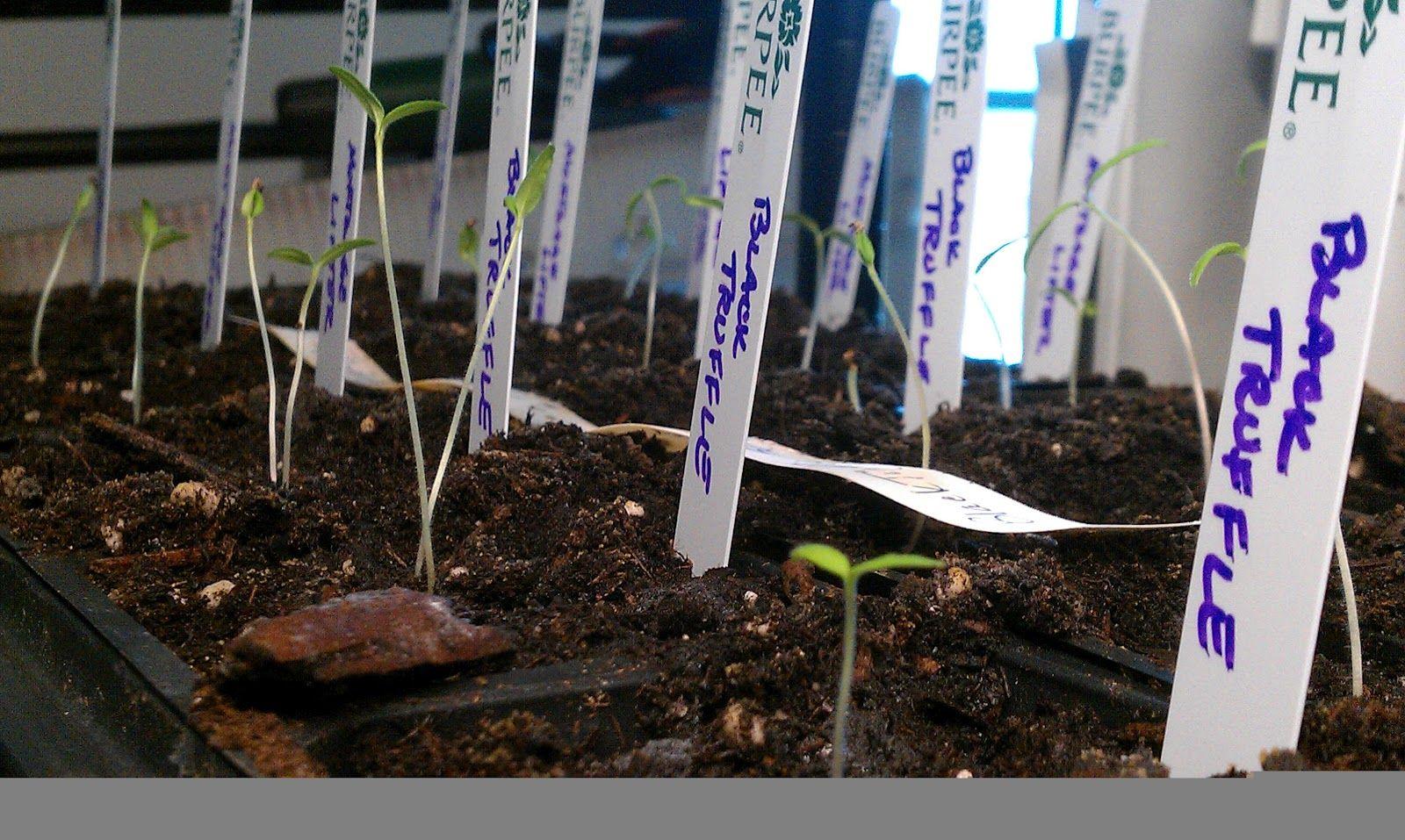 Diy indoor greenhouse for seed starting indoor
