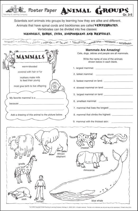 Animal Categories Animal Groups Poster Paper Animal Groups