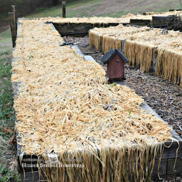 How To Use Cover Crops In Raised Beds