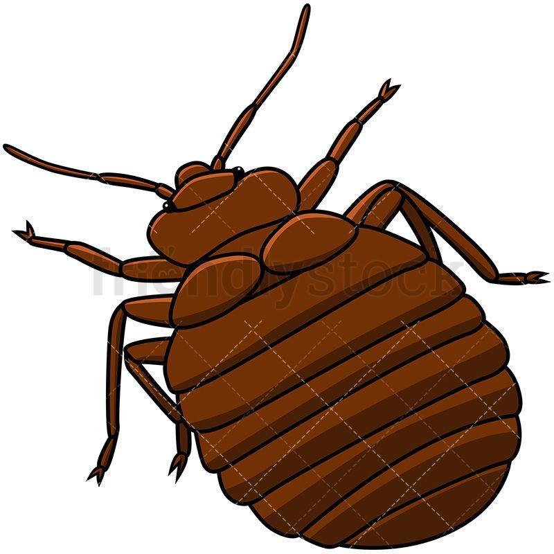 bed bug top back view cartoon vector clipart rh pinterest com