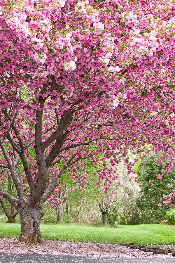 Pin On Trees Of Spring