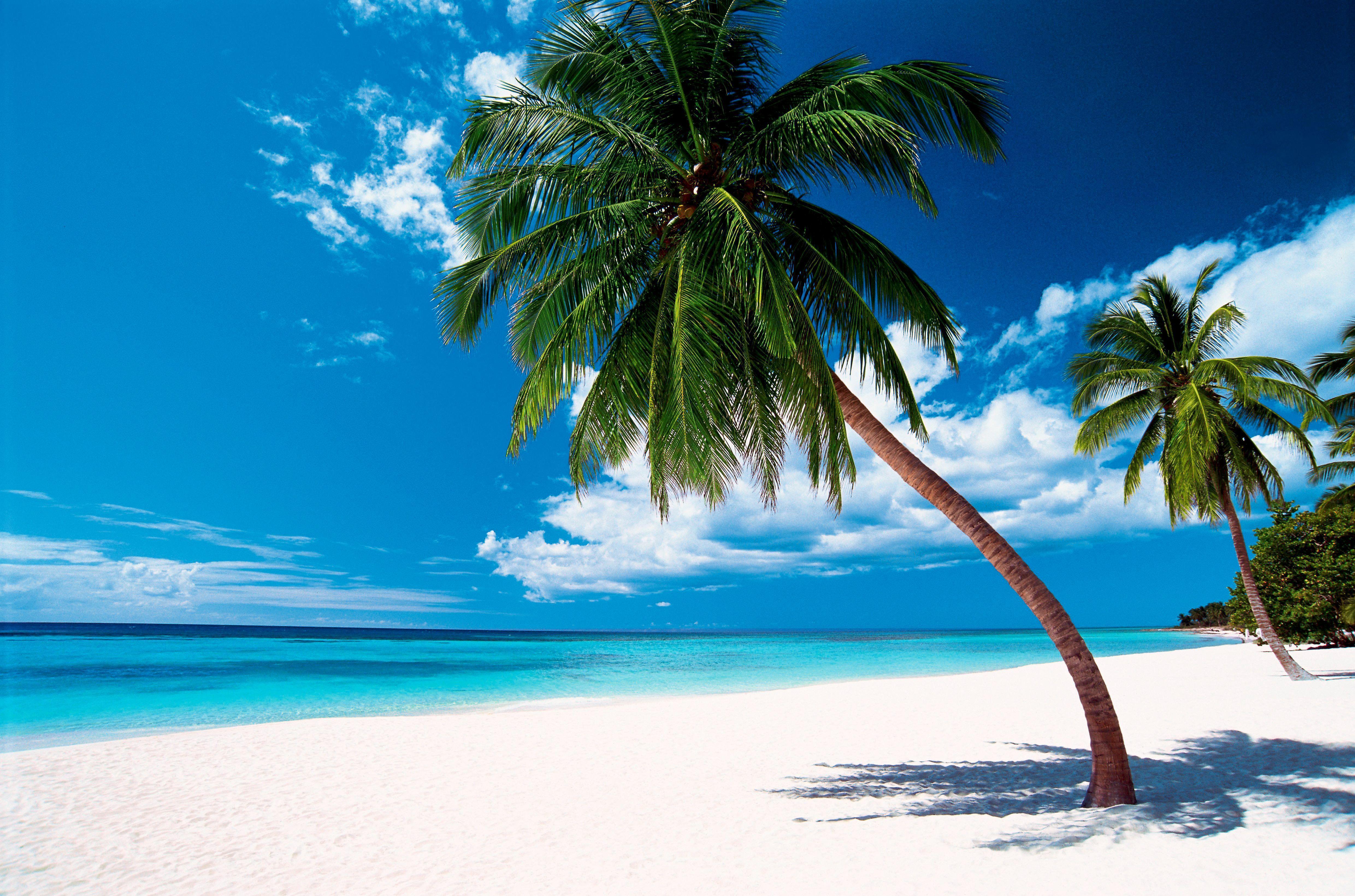 Beach Dominicaanse Republiek Dominicaanse Republiek Punta Cana Vakantie