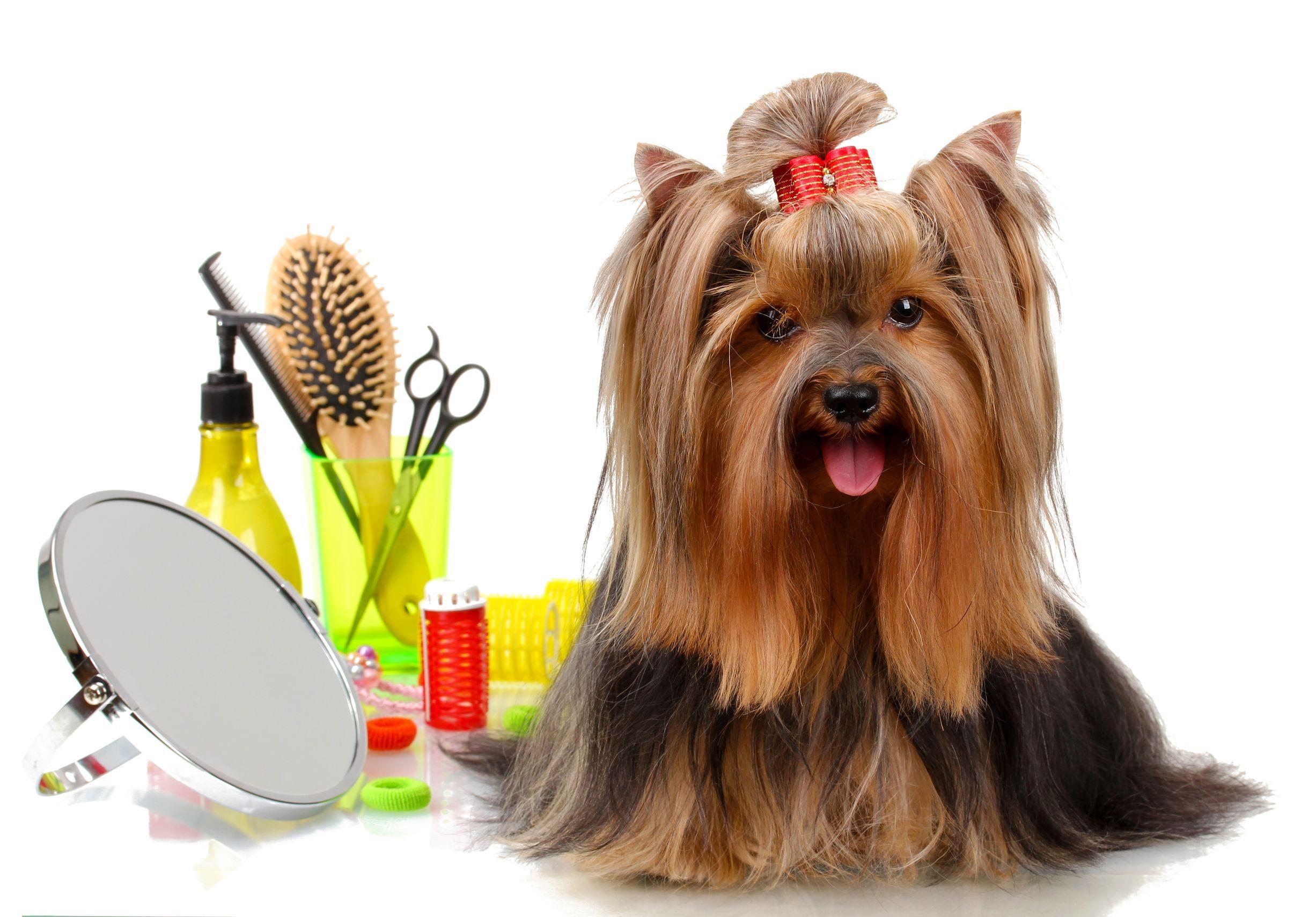 Keep Your Pooch Pampered With Kannis Products Perros Acicalados Aceites Esenciales Perros Mascotas Cuidados