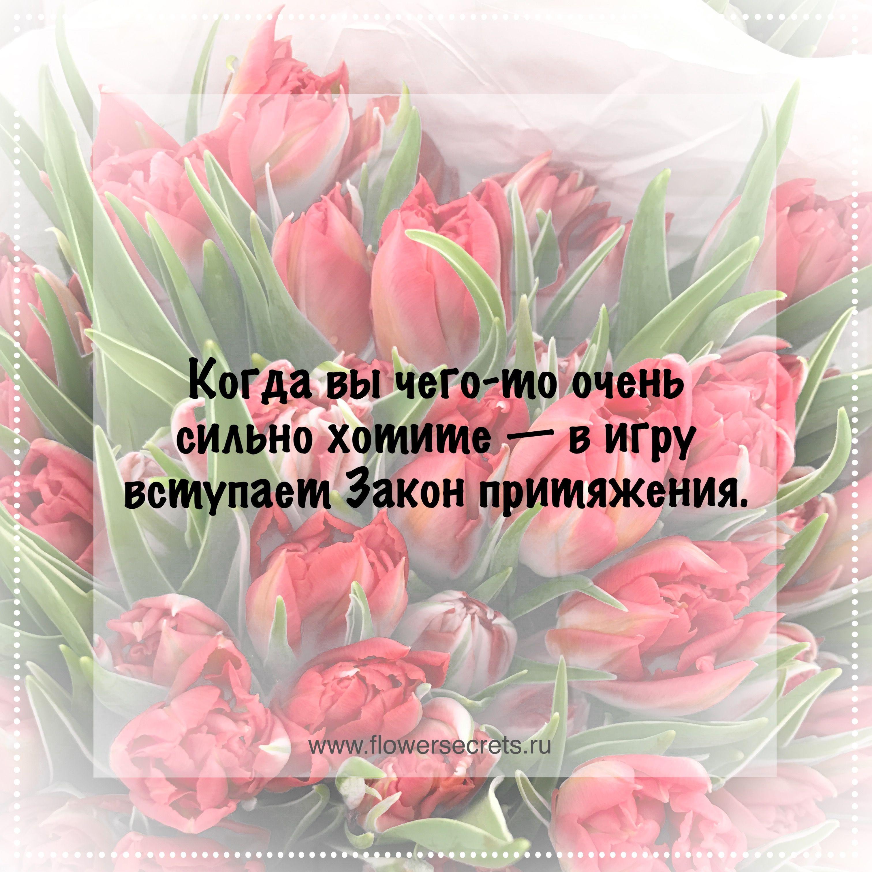 Цитата про цветок