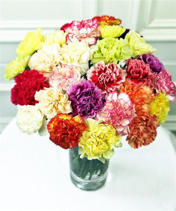Carnations Carnations Carnation Flower Pretty Flowers