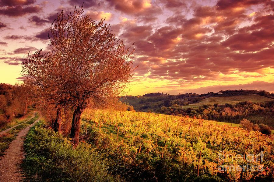 Sunset Tuscany Landscape San Gimignano Canvas Wall Art prints high quality