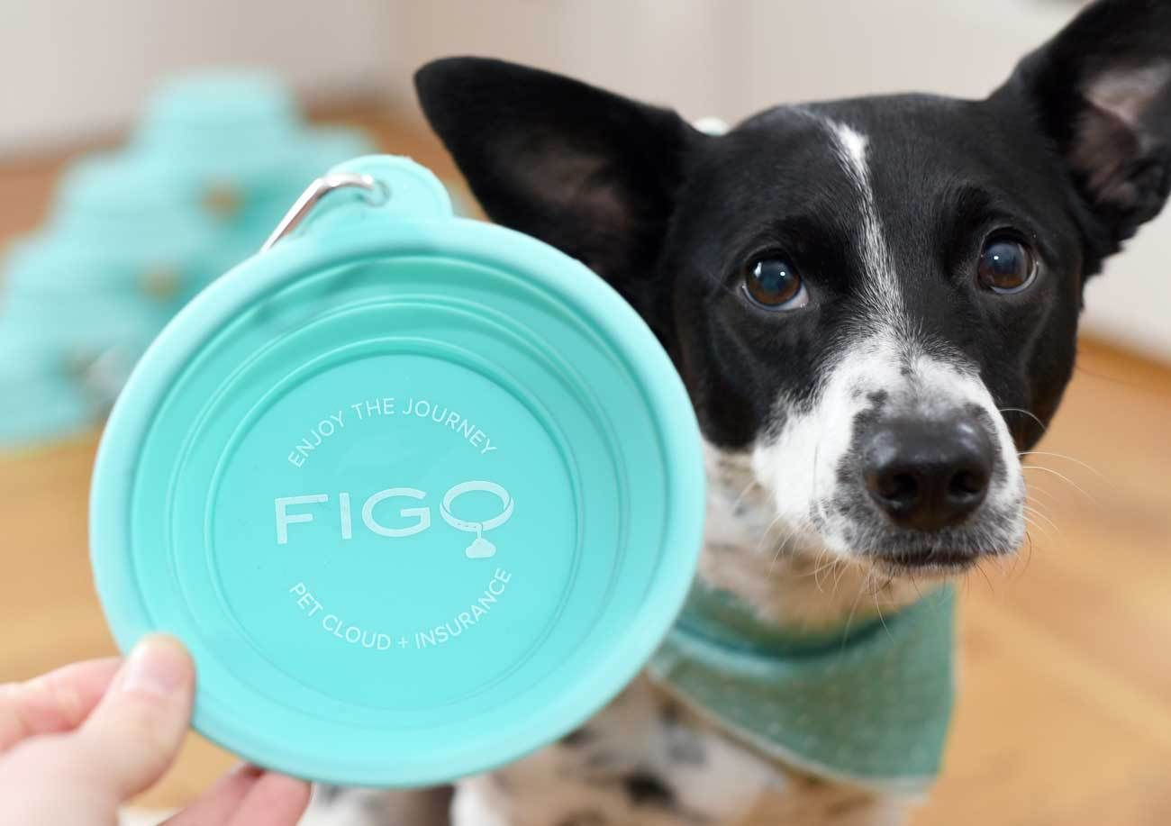 Figo Pet Insurance Peace Of Mind For Your Pet Dog
