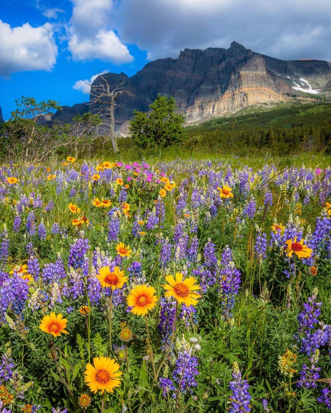 Красивые картинки фото цветы природа