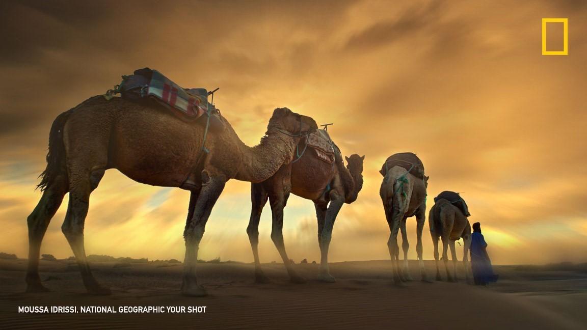 [ARTICLE] @NatGeoPhotos : Top Shot: Camel Train https://t.co/u6ldCLj2TF #YourShot https://t.co/fjMq8GezcM