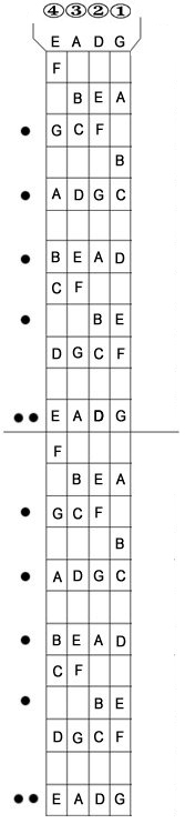 Bass Fretboard Diagram Complete 24 Fret