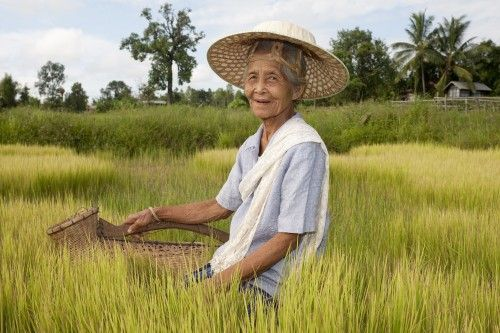 Asian rice farmer