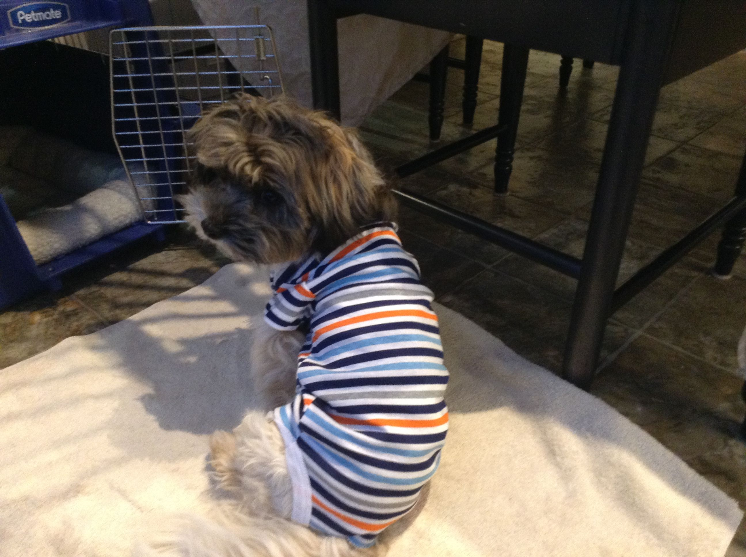 I Put My Dog In A Baby Onesie Instead Of A Cone Paralyzed Dog Cute Animals Dogs