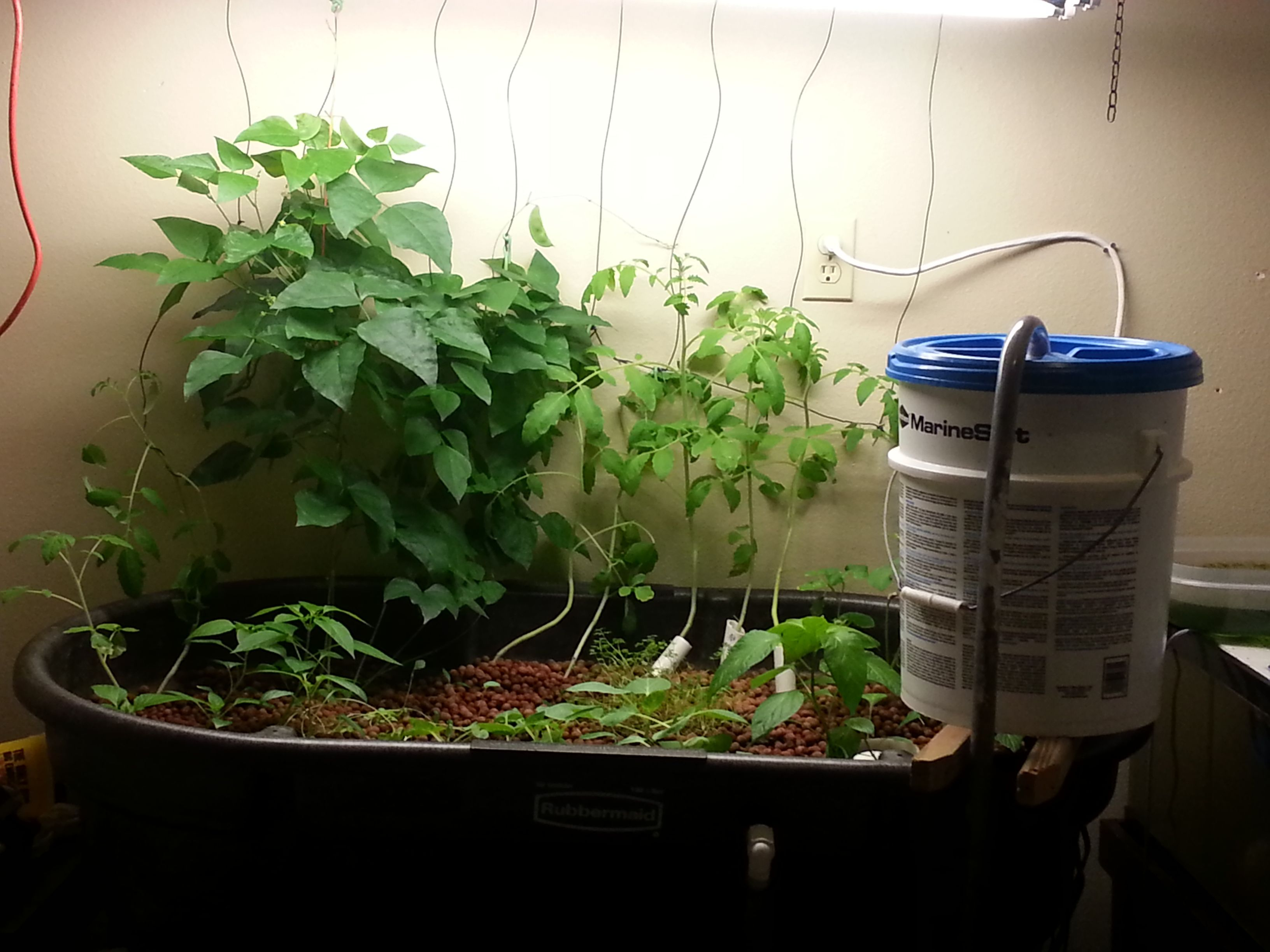 garage aquaponics indoor gardening during winter in colorado